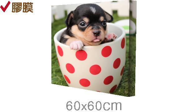 60x60cm-epson無框